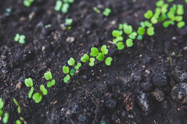 rucola-salad-plant-leaf(1)